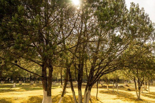 areas-verdes-1024x1024